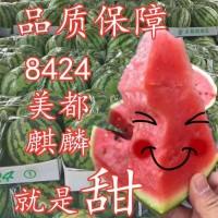 商丘夏邑西瓜上市时间 今日8424麒麟瓜美都西瓜批发多钱一斤